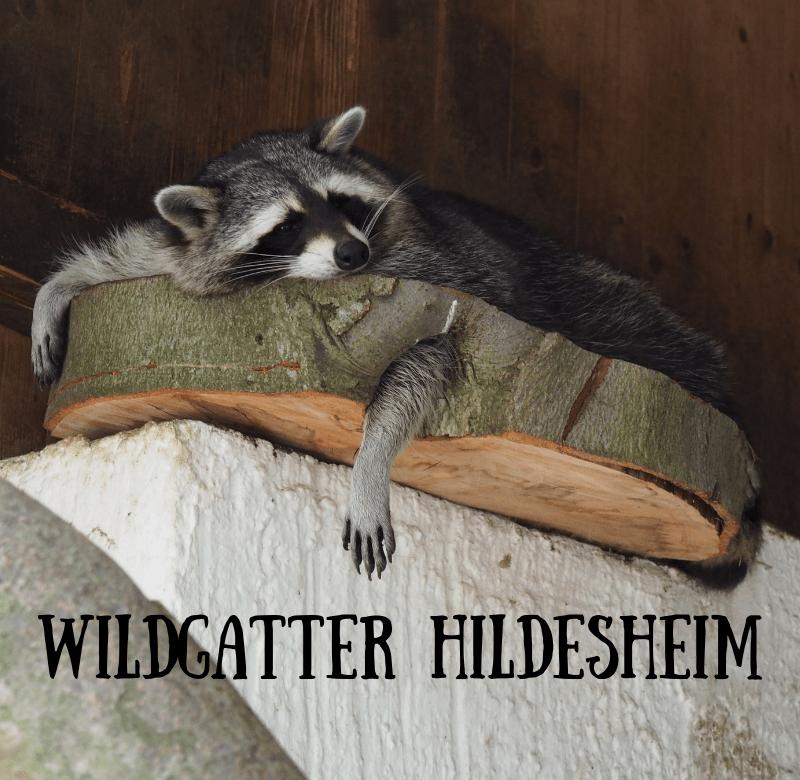 wildgatter hildesheim