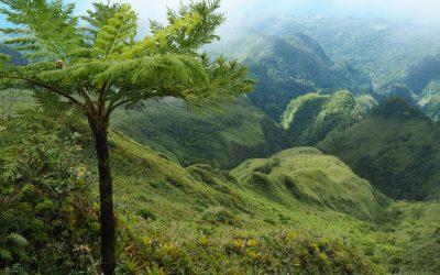 Ostéo Martinique