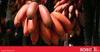 Ada satu suku kaum kat Malaysia ni, boleh kena sopak kalau makan pisang merah!