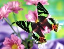 free-butterfly-wallpaper-21793-22336-hd-wallpapers[1]