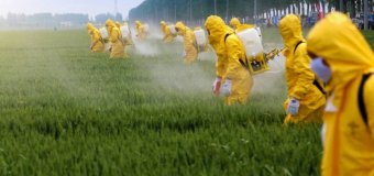 Segurança da produção alimentar brasileira em sério risco