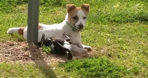 Hund og fugl er bestevenner