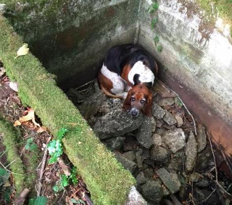 Foto: Facebook/Vashon Island Pet Protectors