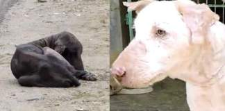 Hunden var døende. 2 måneder med kjærlighet gjorde han helt ugjenkjennelig.