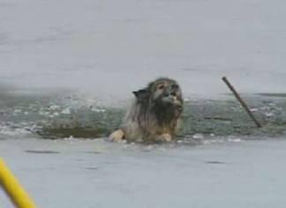 hund gjennom isen