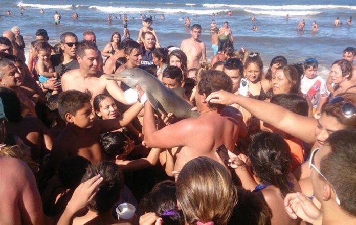 la plata delfin