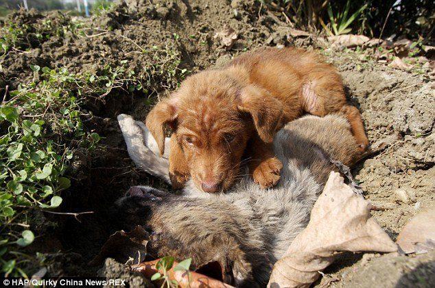 loyal-puppy3