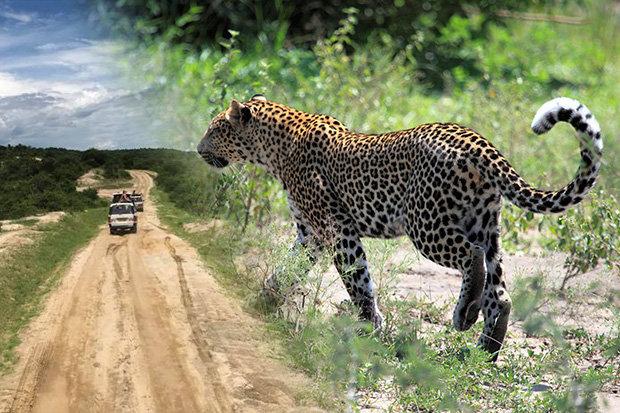 5af0456fd2371_leopard