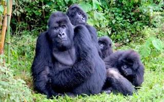 اهم المناطق السياحية في رواندا