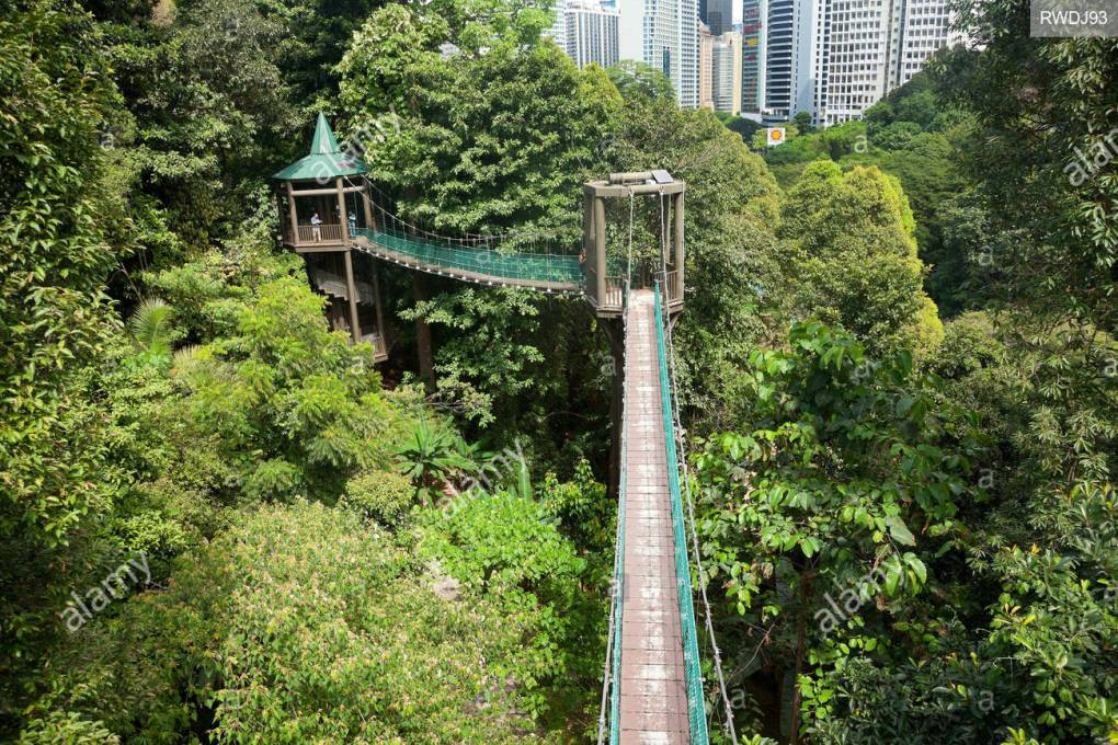eco-forest-kl-kuala-lump-eco-park-in-the-the-the-the-the-City-Hill-peapple-tree-canopy-walkway-walkway-walkway-walkway-walkway- ممشى RWDJ93