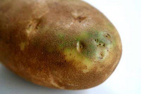 Настойка из цветков картофеля на водке применение