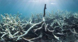 New Images Illustrate Devastating Coral Bleaching in Australia's Great Barrier Reef