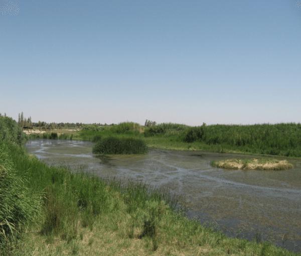 Restored wetlands in Jordan's Azraq Wetlands Reserve. (Jessica Hoskins)