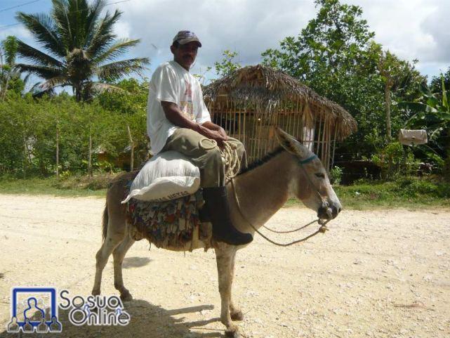 Cuantos caballos de fuerza, perdón burro de fuerza