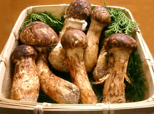 Matsutake Mushrooms — 00/ Kilogram