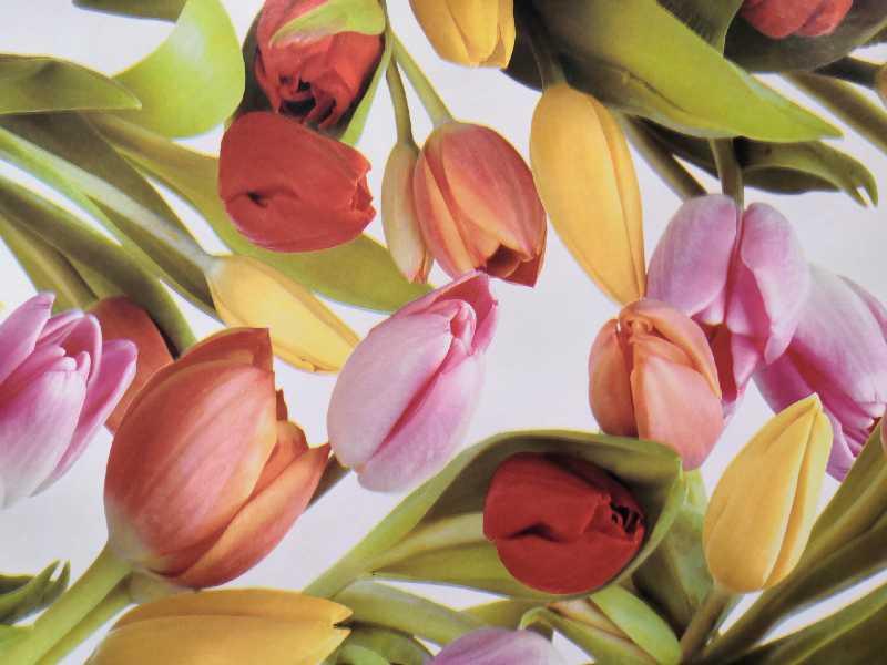 Tulipános viaszos vászon