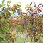 "Aim domestic wine through – enjoy the winery ""Amanohashidate Winery"""