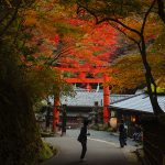 """Kyoto autumn colors photo studio – Sagano """"Adashino Nenbutuji temple"""""""
