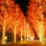 ROHM's illumination is beautiful also the attitude of the company to reduce the region