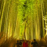 Start bamboo forest of light up there is fantastic Kyoto Arashiyama Hanatoro 2016