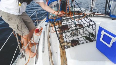 Caught crabs!