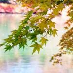 【撮影スポット】紅葉の雲場池(くもばいけ)