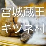 「宮城蔵王キツネ村」でキツネの様々な姿を間近で撮影!