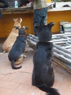 I cani di Cinzia aspettano l'asado.
