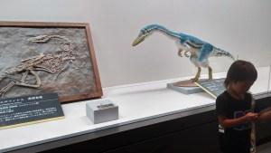 ティラノサウルス展。夏休み