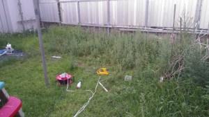 除草バイブレータでヨモギと雑草群を抜く