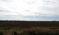 A view of Paynes Prairie.