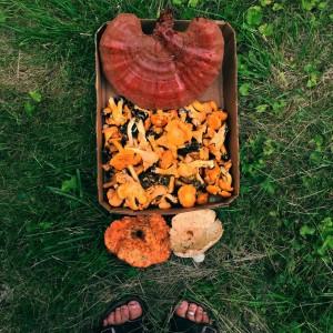 I have so mushroom in my heart for mushrooms!