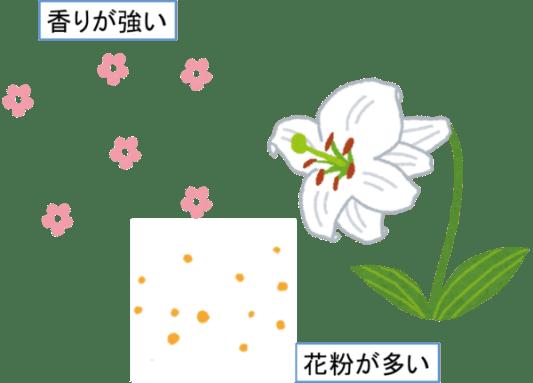仏壇にダメな花 香りの強い花花粉が多い花 ユリ カサブランカ