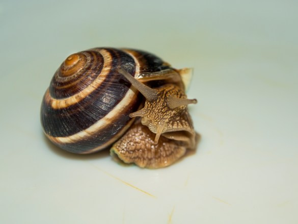 One snail