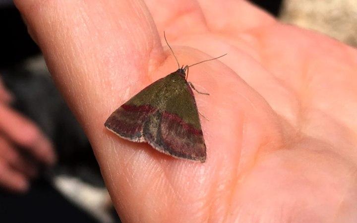 Ein Schmetterling auf meiner Hand - und in mir drin: Im Naturhotel Pfösl genieße ich die Leichtigkeit des Seins und feiere das Ritual.
