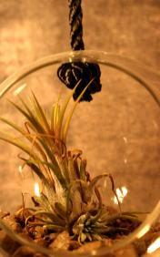 """Der kleine """"Garten im Glas"""" schmückt die Wand des Soulful Zimmers"""