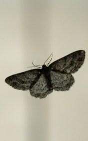 Ein Schmetterling aus dem Hochmoor fühlt sich im Soulful Zimmer ebenso wohl