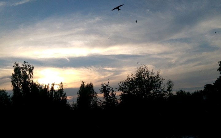 Mauersegler am Abendhimmel helfen mir als Boten der Stille, mich selbst zu finden