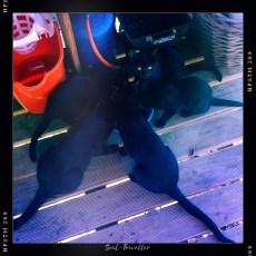 011 Gavião cinco negro gutas – Meine fünf schwarzen Katzen