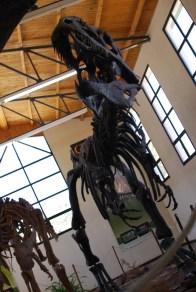 Giganotosaurs!