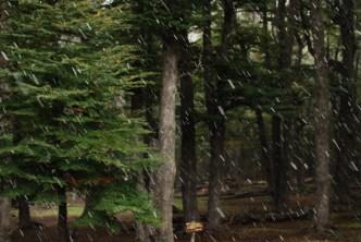 Snow at camp