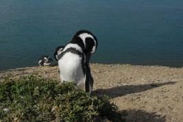 One handsome penguin