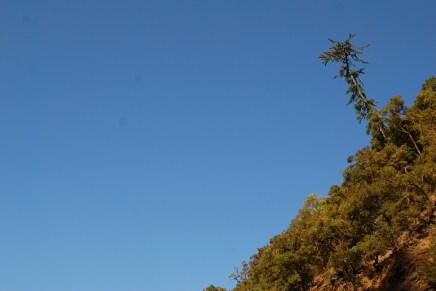 Lone Pine!