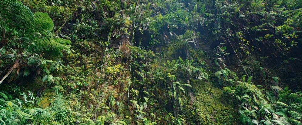 Bogor rainforest, Indonesia (c) planetary collective