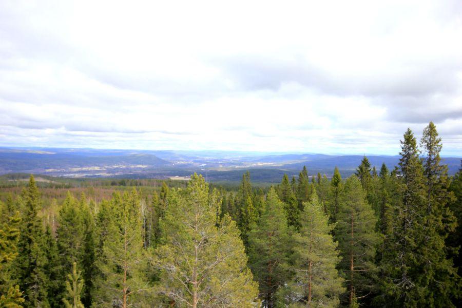 Ådalen från brandtornet på Lidberget