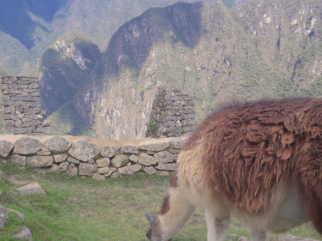 How to keep things ethical when interacting with animals abroad