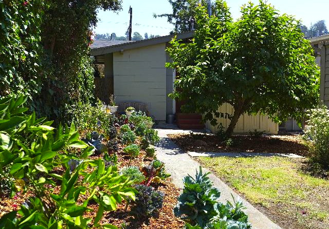 Yard with drought tolerant landscaping and edible plants
