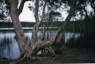 Brown Lake, Stradbroke Island, Queensland, Australia - taken by Sue Ellam, London, UK