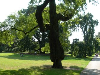 An amazing tree, Kew Gardens, London - taken by Sue Ellam, London, UK