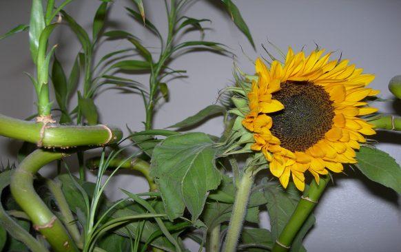 Sunflower by Sue Ellam, London, UK